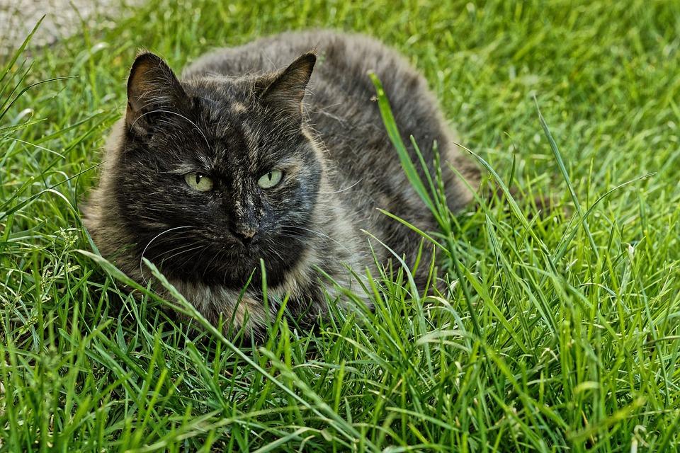 Cat, Portrait, Eyes, Face, Meadow, Relaxed, Head