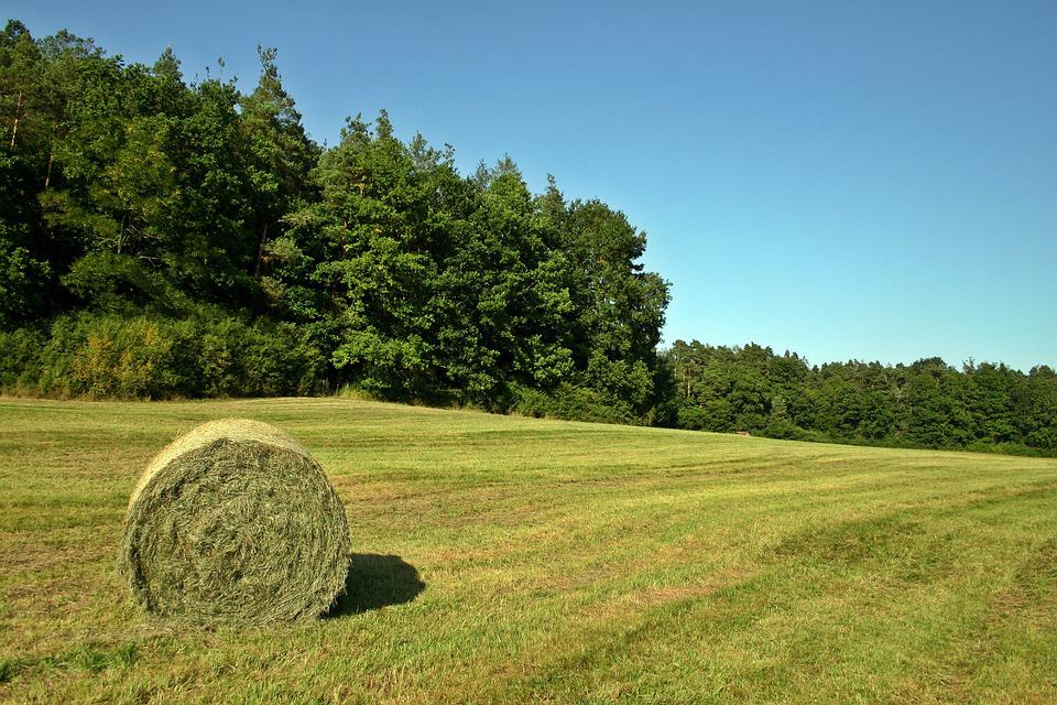 Hay, Hay Bales, Field, Meadow, Forest
