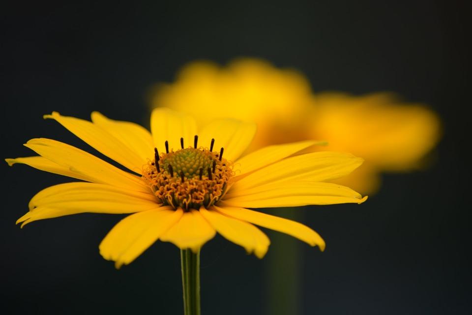 Flowers, Petals, Stems, Garden, Meadow, Nature, Flora