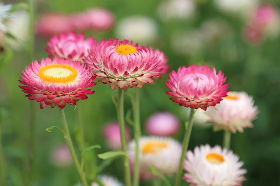 Flowers, Flower Meadow, Summer, Meadow, Nature, Flora