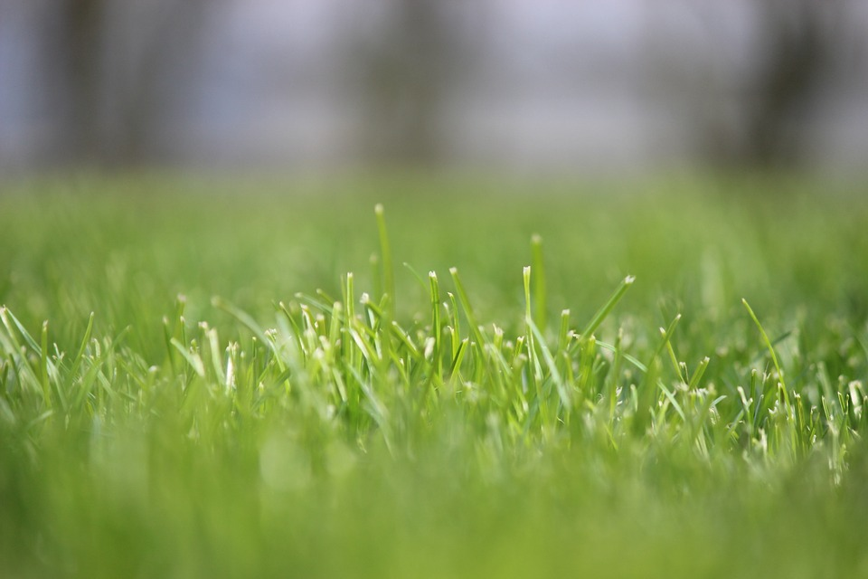Grass, Rush, Focus, Meadow, Juicy, Nature