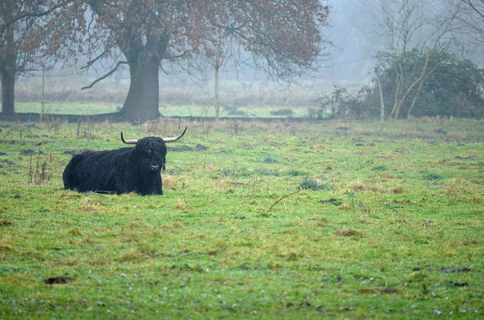 Fog, Cow, Pasture, Nature, Autumn, Meadow, Beef