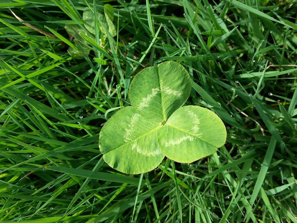 Four Leaf Clover, Meadow, Blade Of Grass