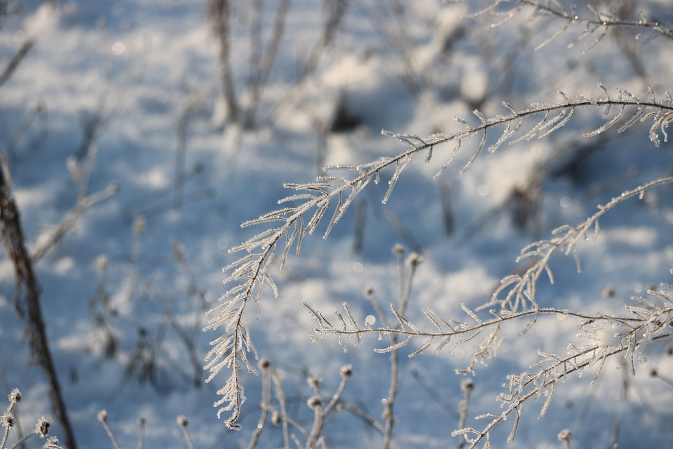 Winter, Iced, Cold, Meadow, Snow, Frozen, Eiskristalle