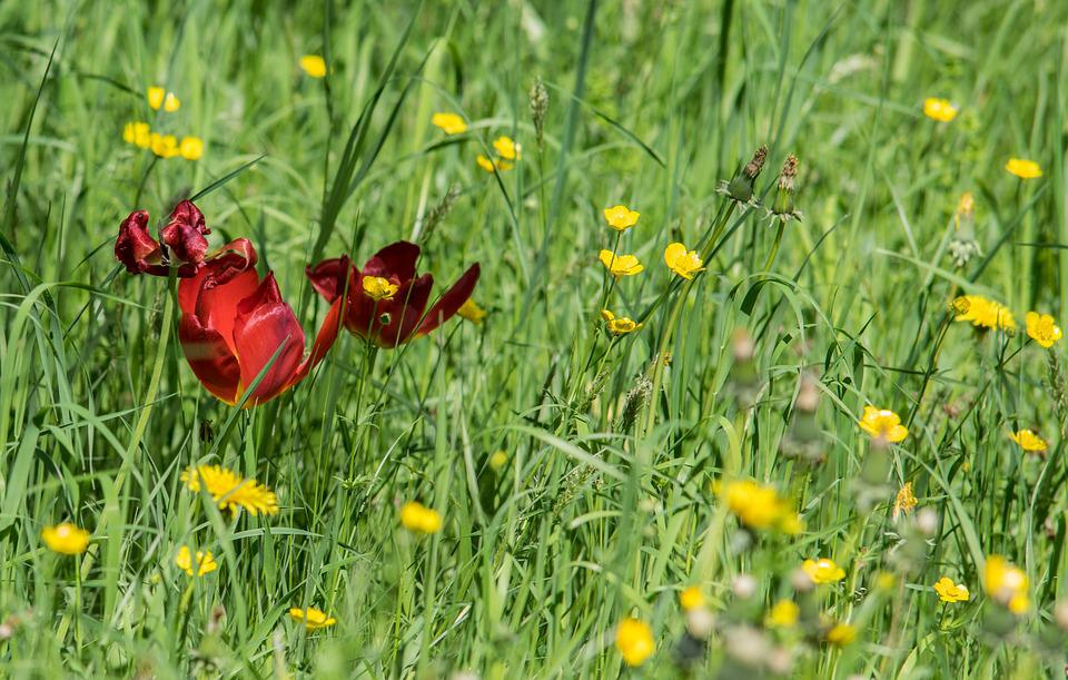 Flower, Nature, Meadow, Grass, Summer, Plant, Garden