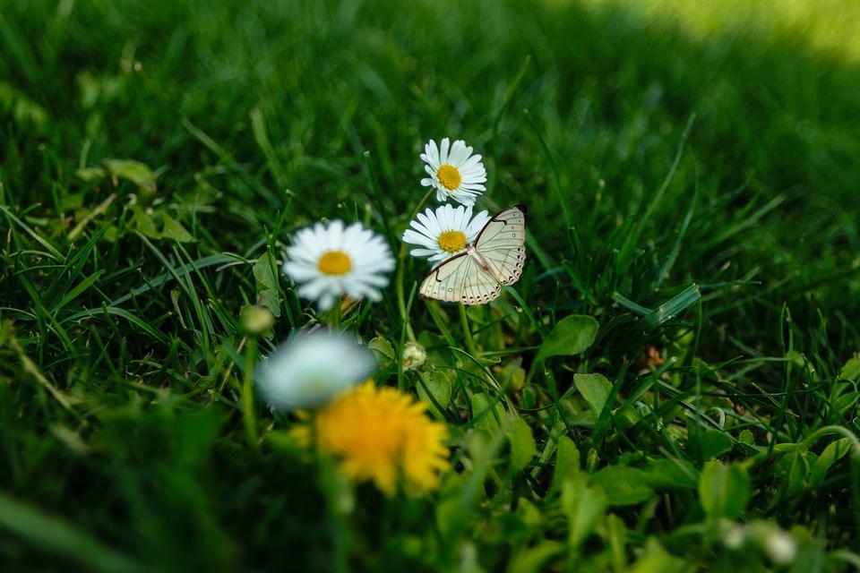Meadow, Flowers, Butterfly, Grass, Green, Bloom