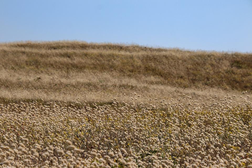 Landscape, Hare Tail Grass, Meadow, Grass
