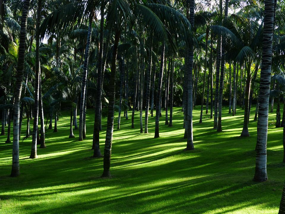 Meadow, Grass, Palm Tree Forest