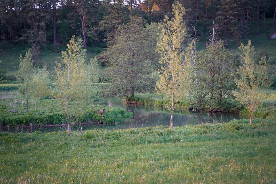 Tree, Meadow, Sun, Mood, Romantic, Grass