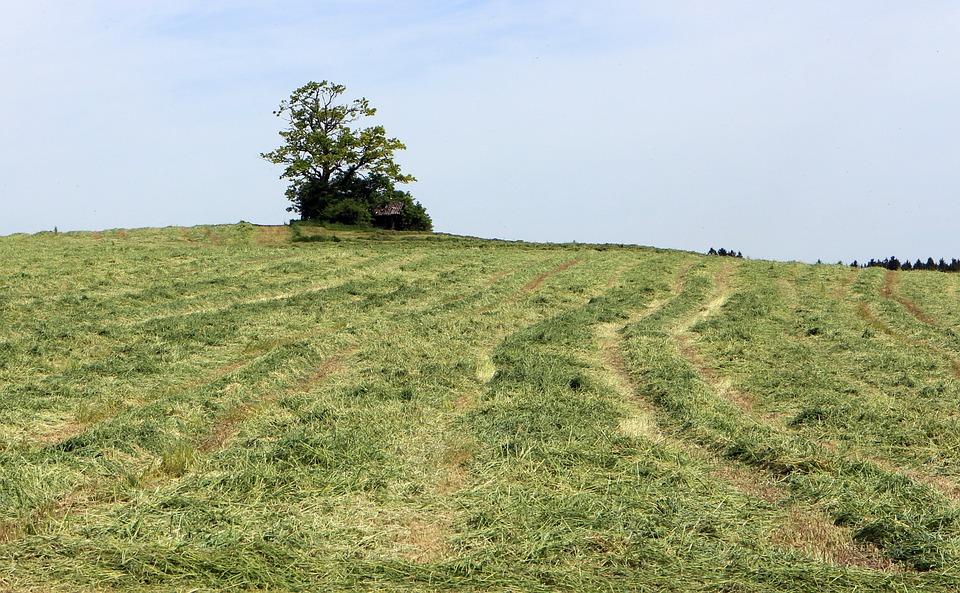 Hill, Meadow, Field, Grass, Wide, Nature, Sky