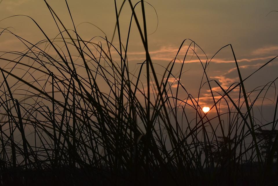 Sunset, Dusk, Twilight, Meadow, Grass, Reeds, Sun