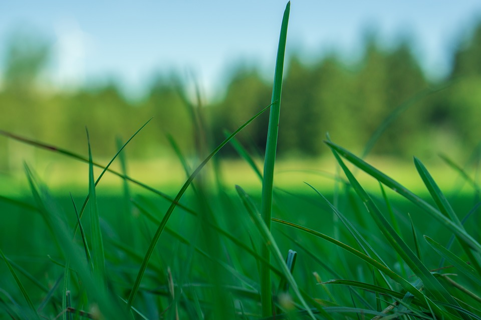 Grass, Nature, Green, Grasses, Meadow, Sky, Plant