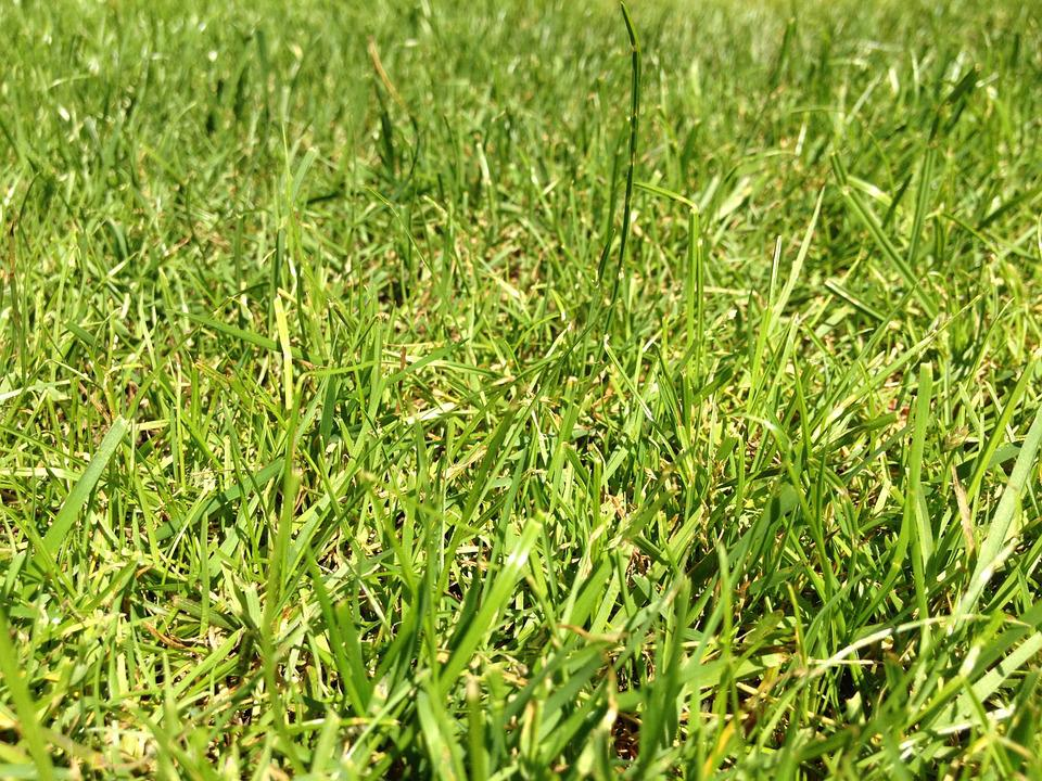 Grass, Rush, Green, Meadow, Halme, Blades Of Grass