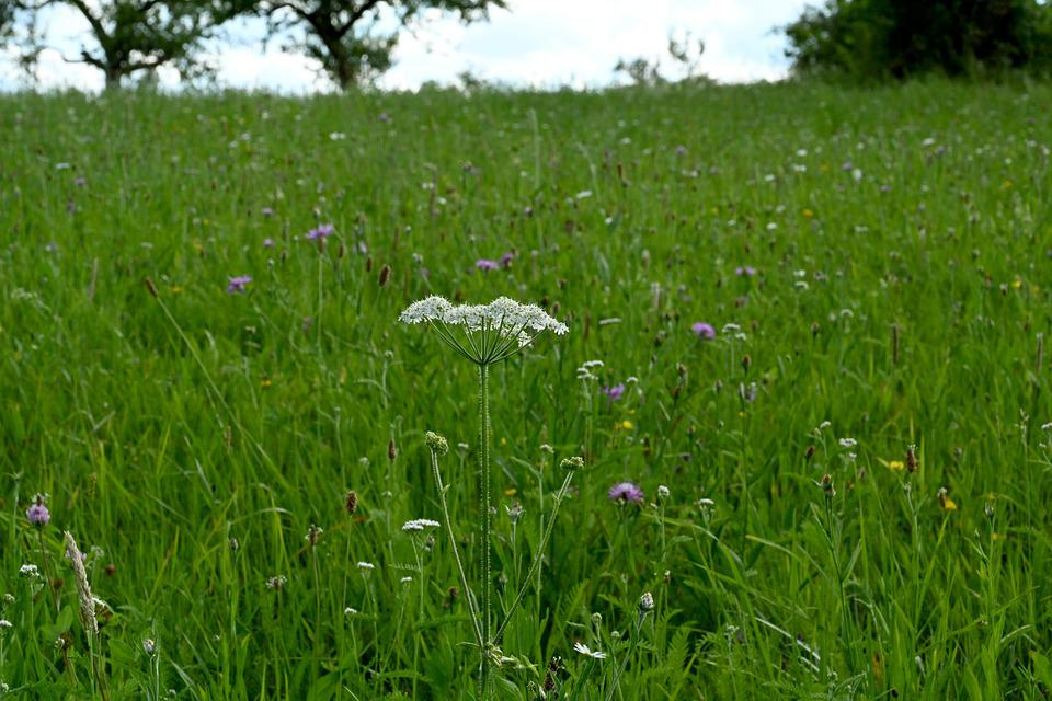 Meadow, Landscape, Nature, Green, Rest, Herb, Herbs