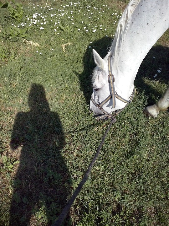 Girl, Horse, Shadow, Summer, Meadow