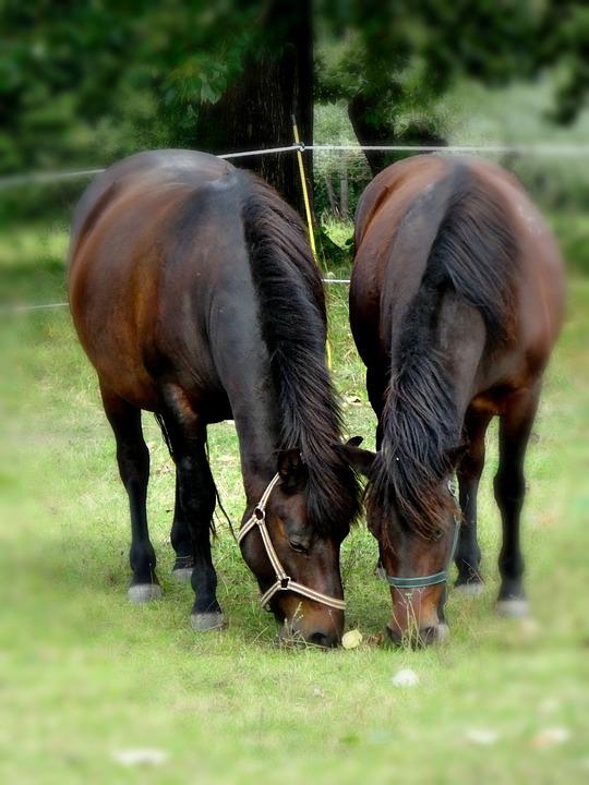 Pieniny, Poland, Pasture Land, Meadow, Horses