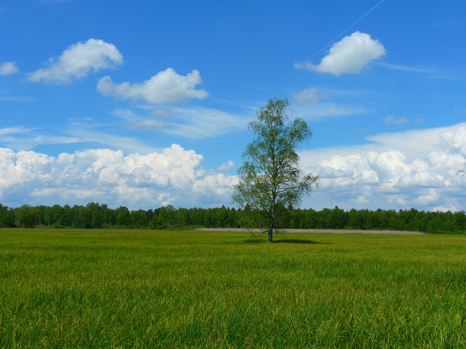 Tree, Landscape, Meadow, Sky, Clouds, Idyll, Rest