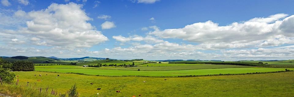 Scotland, England, Landscape, Meadow, Cows, Sky, Clouds
