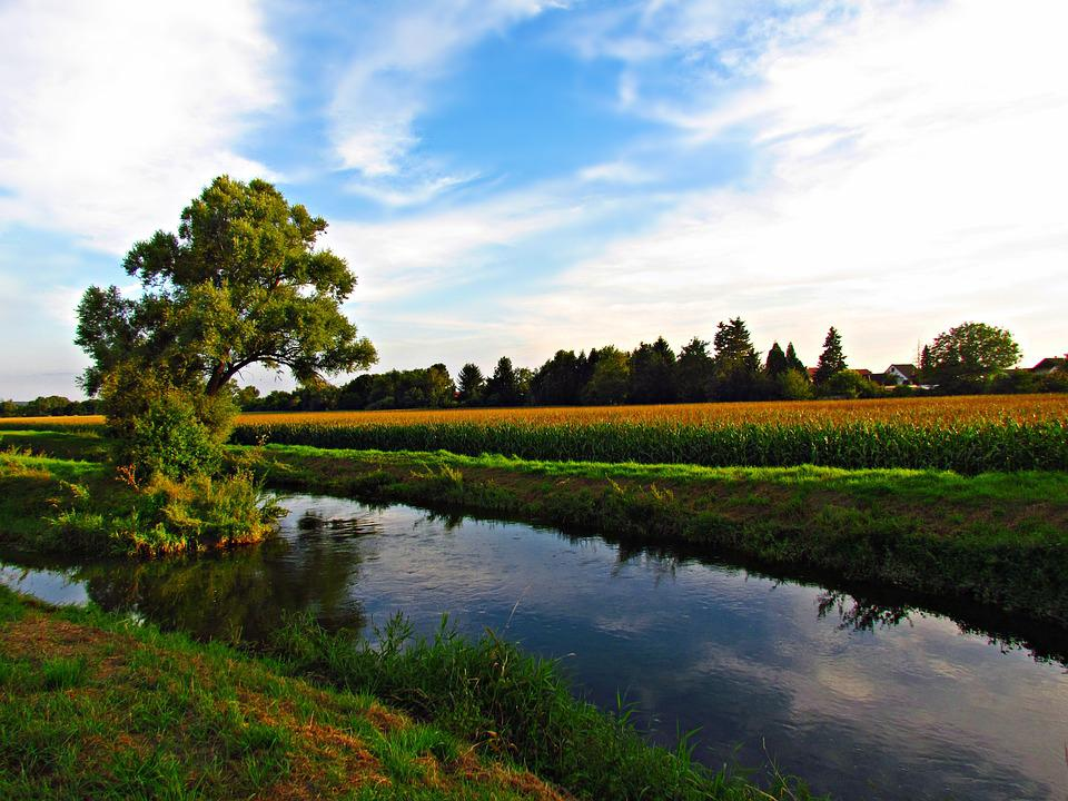 Meadow, Water, Tree, Field, Sky, Nature, Landscape