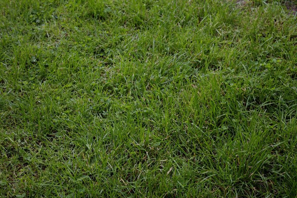 Rush, Meadow, Space, Landscape, Texture, Pasture