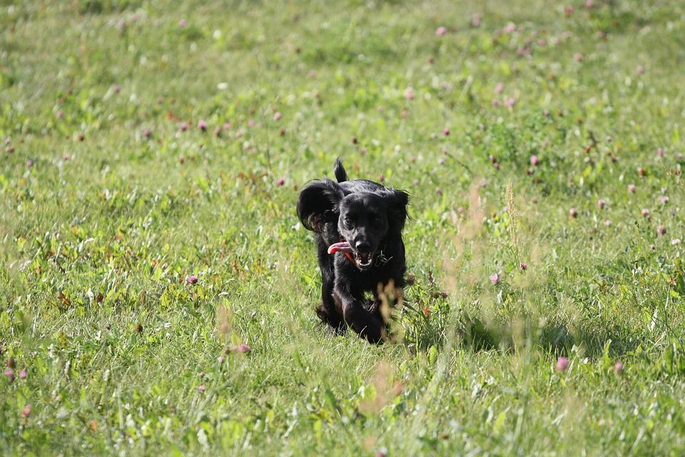 Dog, Gear, Joy, Meadow, Happiness, Grass, Language