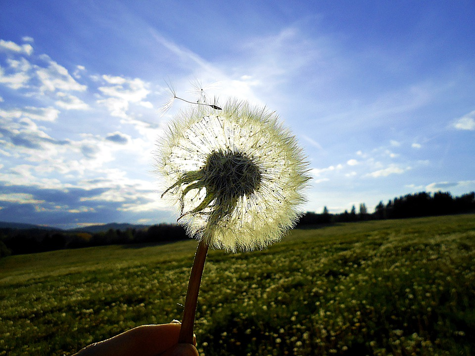 Dandelion, Sun, Glow, Meadow, Light, Free, Heaven