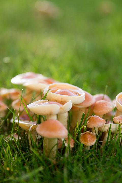 Mushrooms, Meadow, Autumn, Raindrop, Nature, Forest