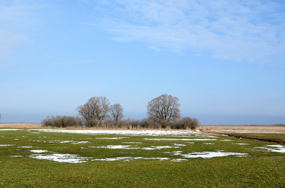 Meadow, Pasture, Reed, Trees, Nature, Blue Sky