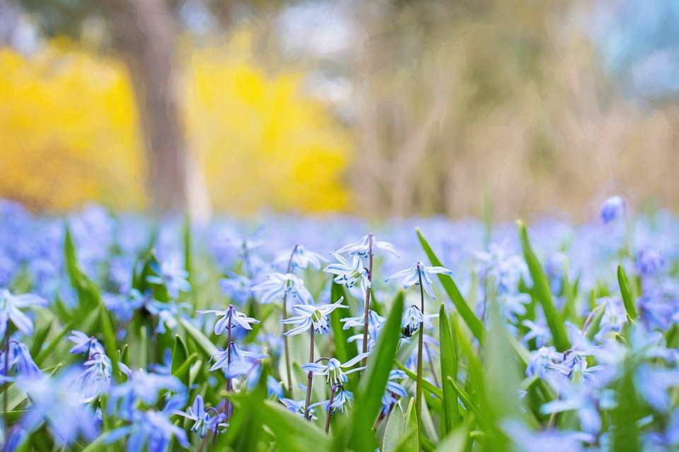Spring Flowers, Country, Nature, Blossom, Meadow