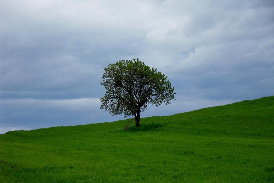 Tree, Landscape, Meadow, Nature, Spain