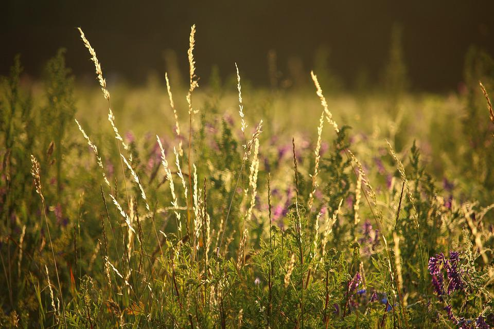 Meadow, Pasture, Edge Of Field, Grass, Summer, Nature