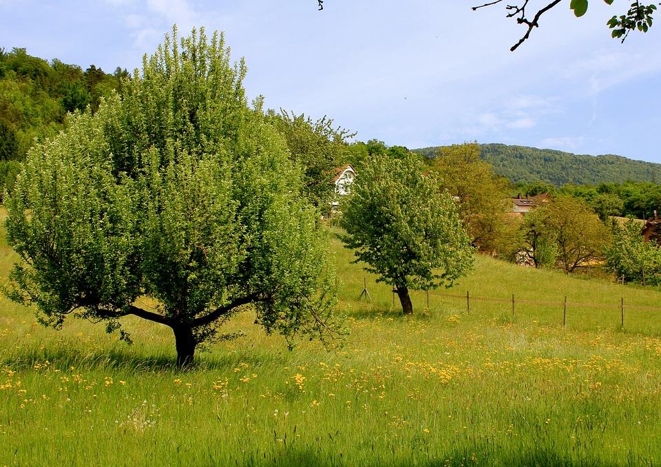 Nature, Tree, Landscape, Meadow