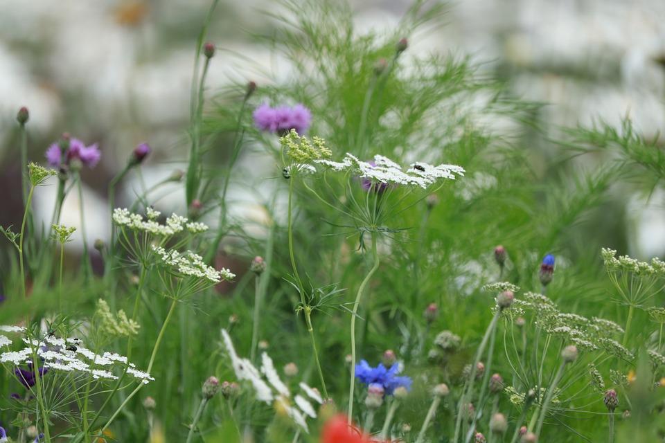 Flowers, Petals, Meadow, Wild Flowers, Nature