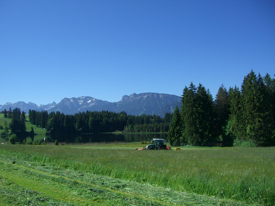 Meadow, Mow, Grass, Green, Section, Hay, Kögel Pond