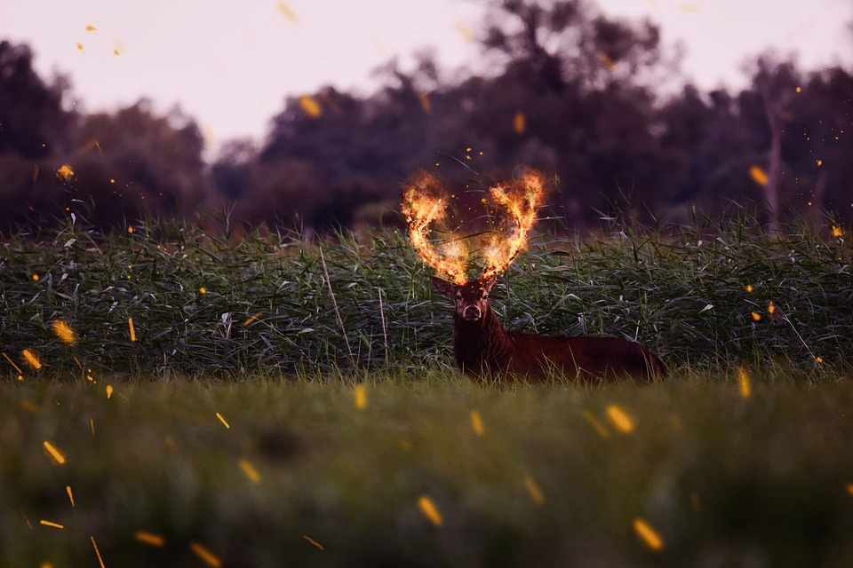 Hart, Meadow, Nature, Space, Closeup, Fire, The Flame