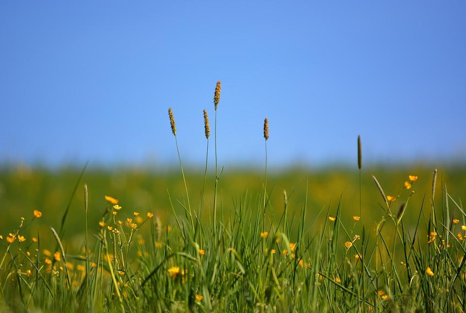 Field, Spring, Green, Yellow, Landscape, Meadow