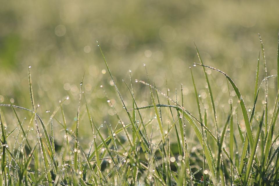 Grass, Dew, Green, Meadow, Nature, Morning, Summer