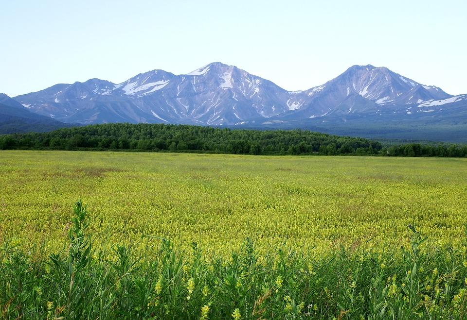 Field, Meadow, Glade, Flowers, Summer, Nature, Grass