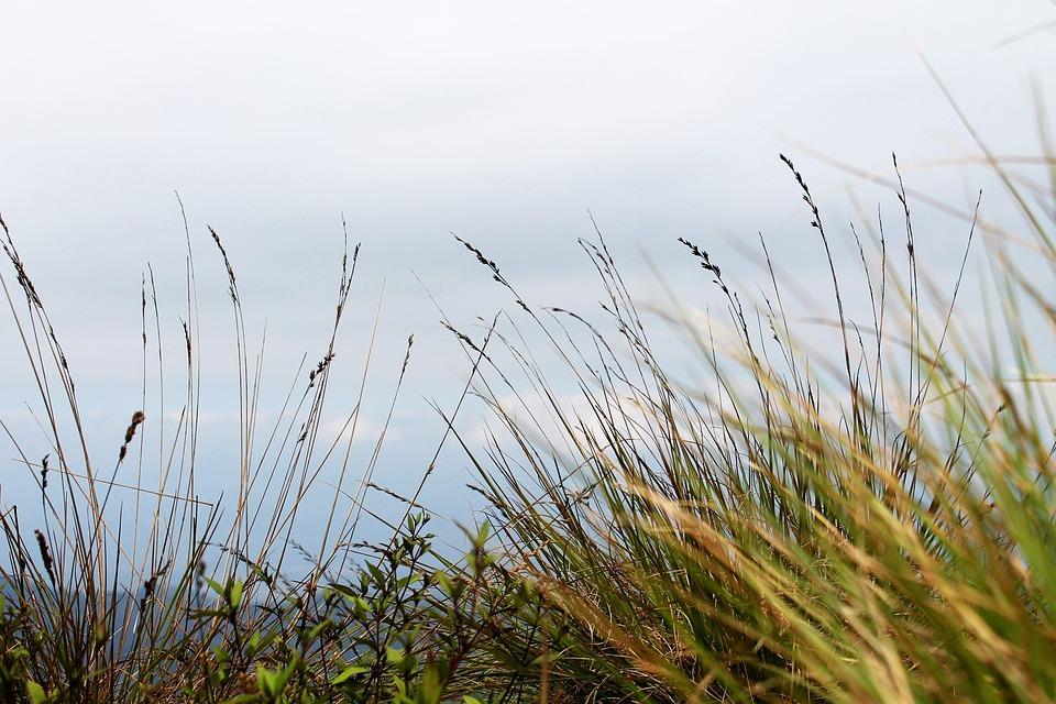 Tall Grass, Grass, Nature, Sky, Meadow, Field