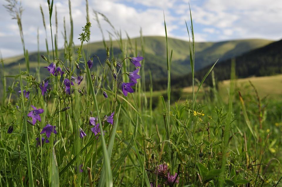 Meadow, The Carpathians, Field, Mountains, Nature