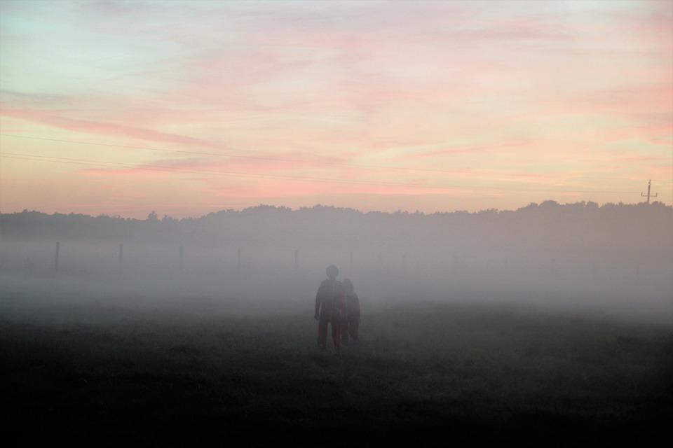 The Fog, Meadow, Evening, Nature, Landscape, Summer