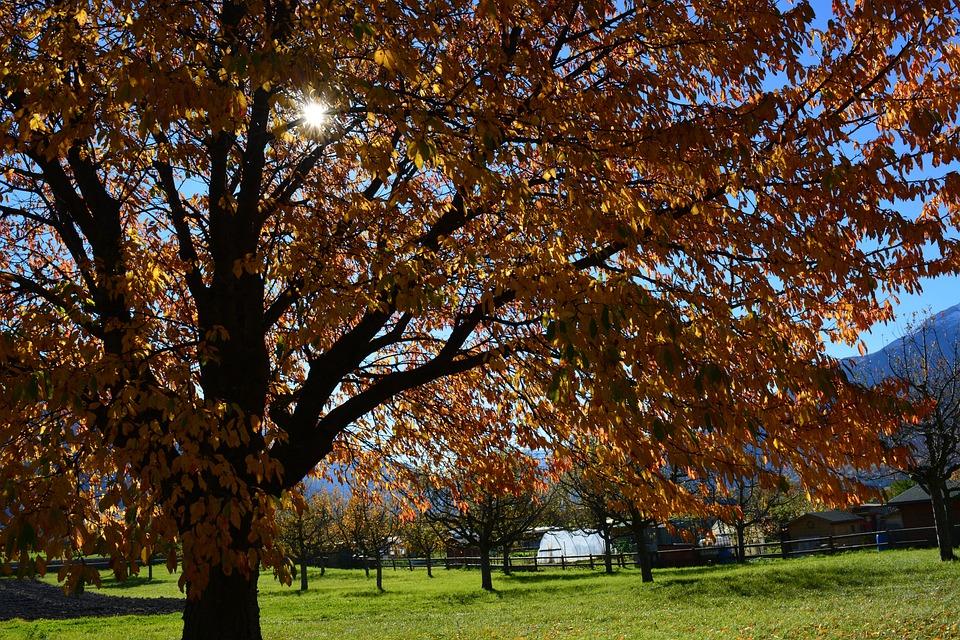 Fall Foliage, Tree, Sun, Meadow, Golden Autumn, Autumn