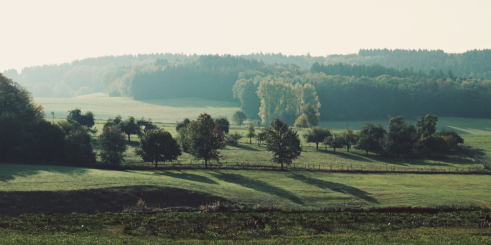 Meadow, Trees, Landscape, Nature, Grass, Rural, Green