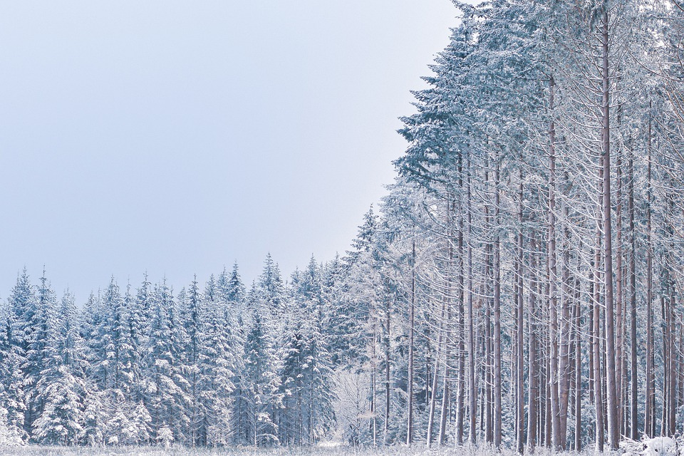 Trees, Woods, Forest, Snow, Field, Meadow, Cold, Winter