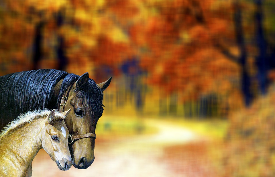 Horse, Two, Horses, Nature, Meadow, Animals, Brown