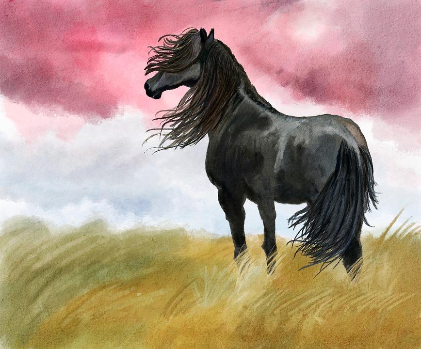Illustration, Horse, Meadow, Black, Wind, Animal, Proud