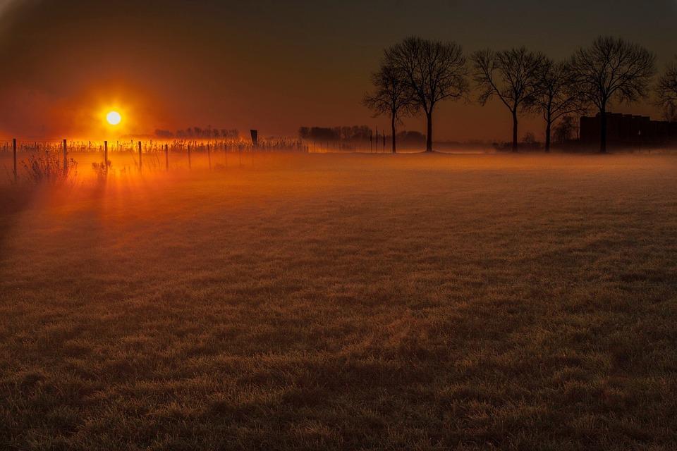 Winter, Sentence, Meadow, Trees