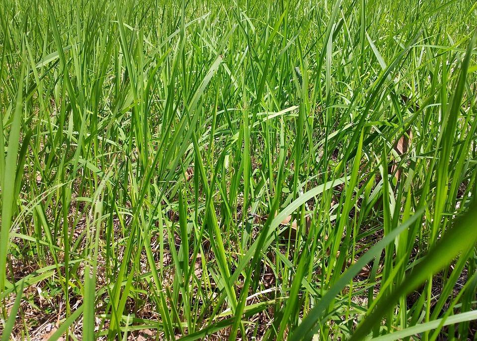 Greenery, Grasses, Meadows, Grasslands, Flora, Plants