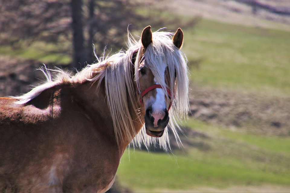 Horses, Meadows, The Mane, The Horse, Look, Pastures
