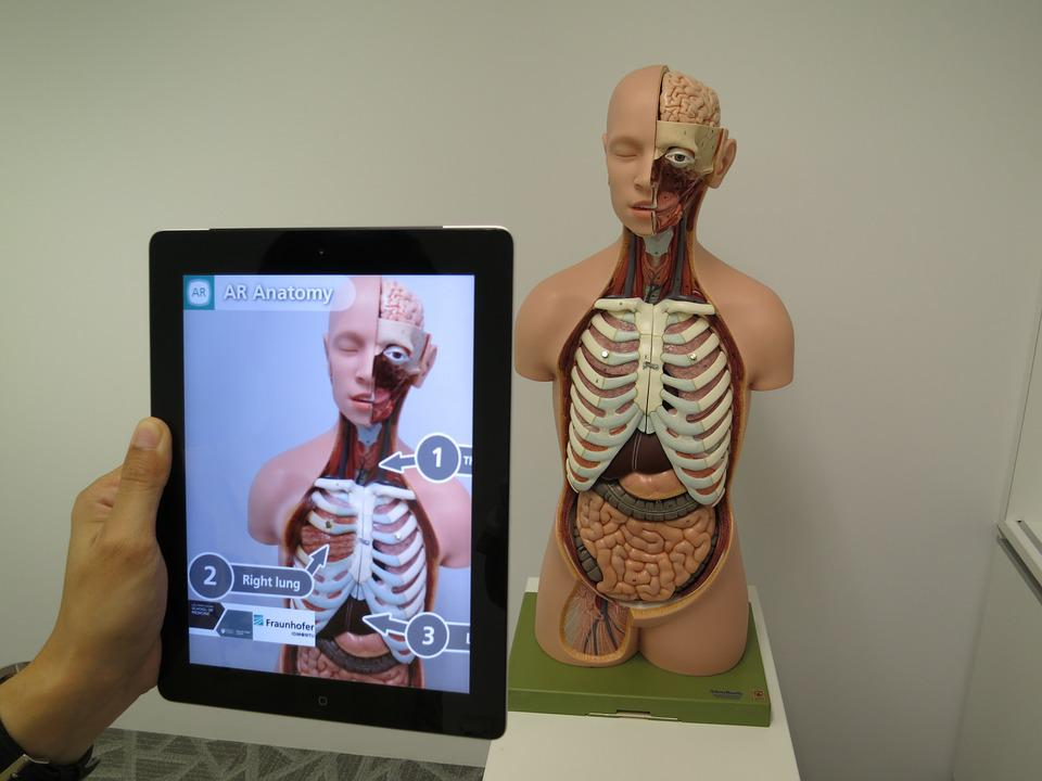 Augmented Reality, Medical, 3d, Science